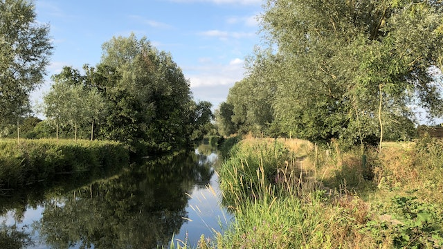 Willows Beside the River Reference Photo.jpg