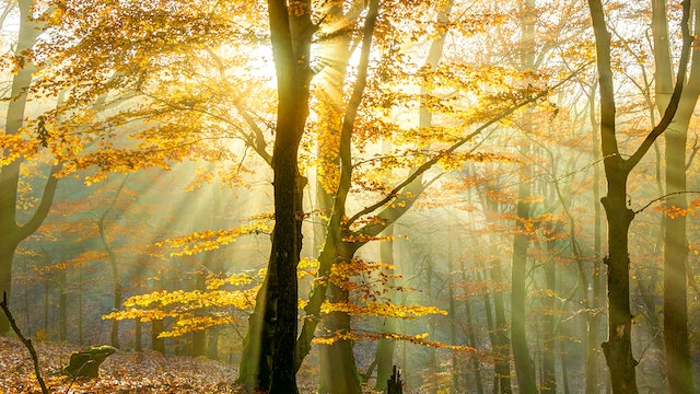 Autumn Rays Reference Photo.jpg
