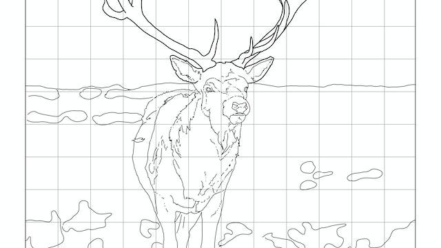 Winter Stag Sketching Diagram.jpg