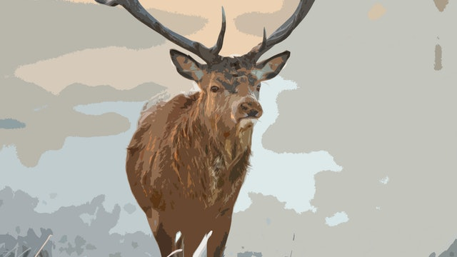 Winter Stag Colour Workings.jpg