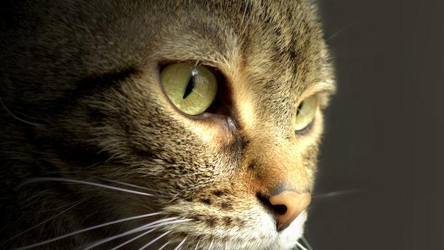 Tabby Cat Reference Photo.jpg