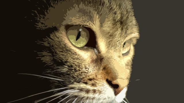 Tabby Cat Block In Guide.jpg