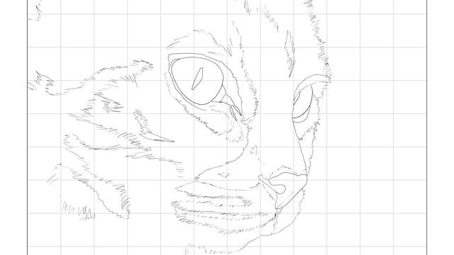 Tabby Cat Sketching Diagram.jpg