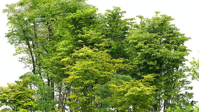 Tree Study Reference Photo.jpg