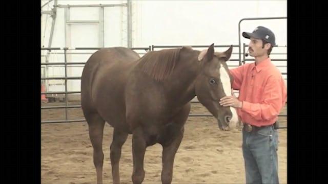 Crib-Free, Solveing Horse Cribbing, (Part 4, Ground and Saddle Exercises)