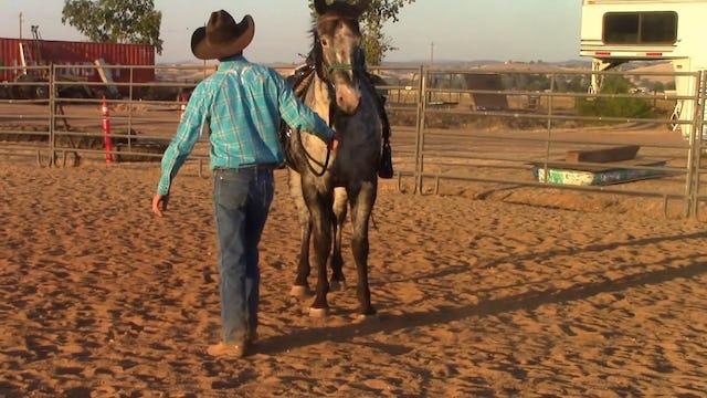 Restarting the Older Horse