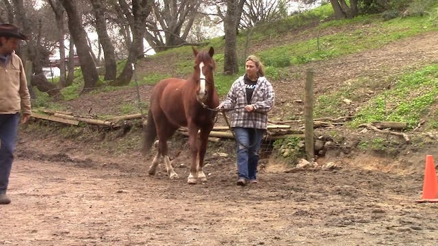 Trail Safety Part 1, How to use your horse as a weapon in self defense