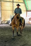 Mike Hughes Horsemanship Members Page