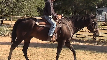 Mike Hughes Horsemanship Members Page Video