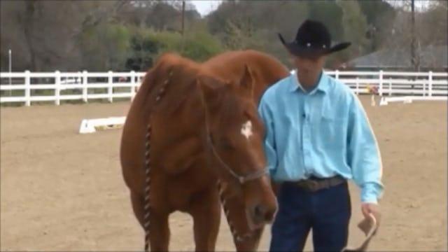 Crib-Free, Solving Horse Cribbing,  (Part 3, Ground Exercises)