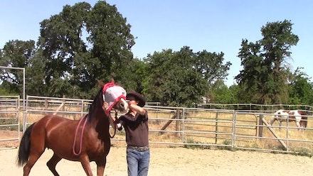 Mike Hughes Horsemanship Members Page Video