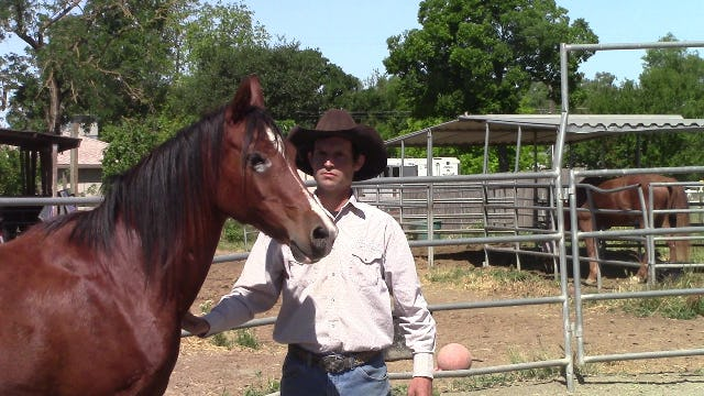 Building Confidence in the Kill Pen Rescue Horse