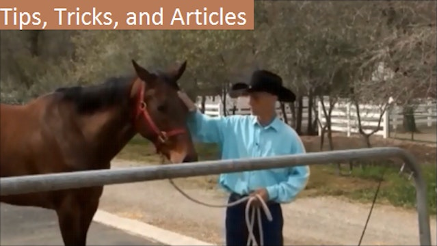 Tips, Tricks, Articles, and info on Horses and Training