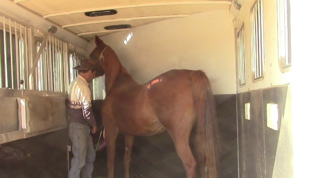 Anxiety In The Horse Trailer