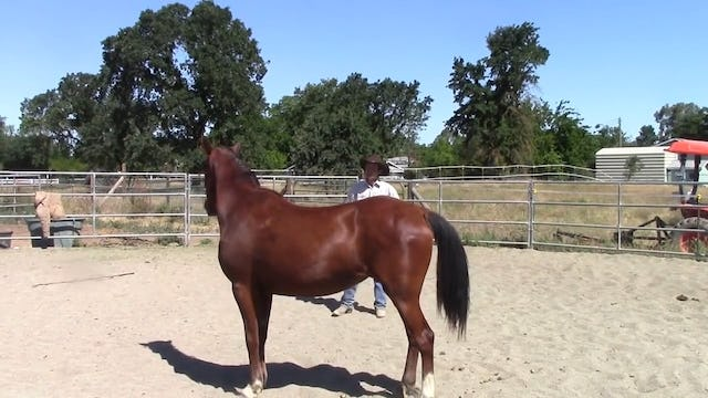 Building Confidence With Rescue Horse Video Preview