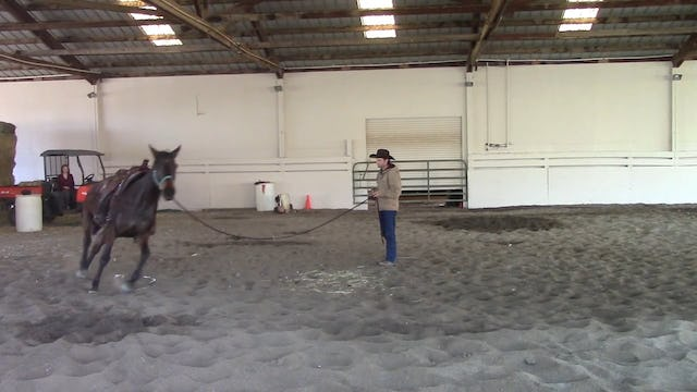 Is Your Horse Ready For A Begginer or Child Rider