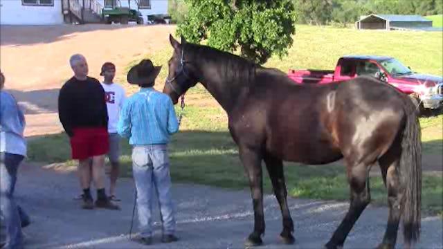 Rescue Horses (Special Event)