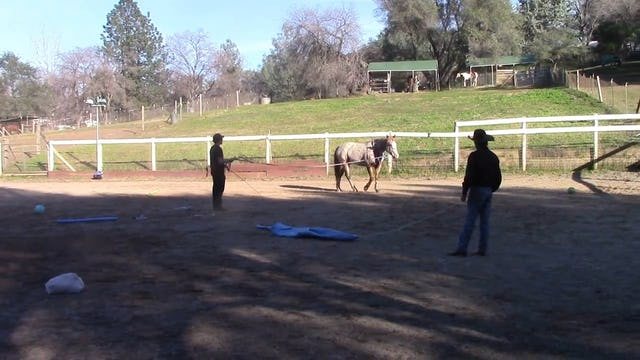Teaching your horse to think before they react
