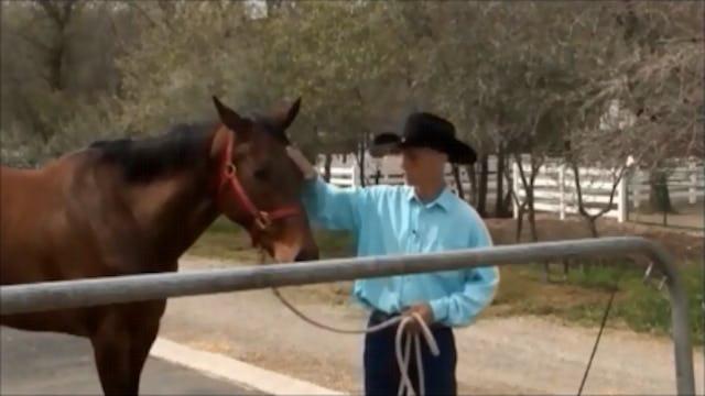 Crib-Free, Solving Horse Cribbing (Part 2, Ground and Saddle Exercises)
