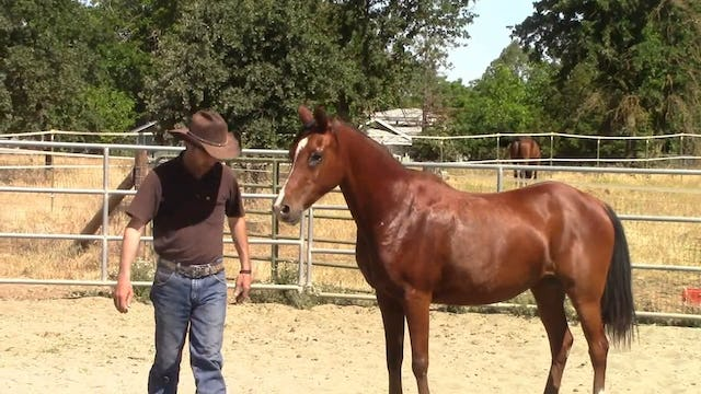 Building A Strong Bond with the Kill Pen Rescue Horse