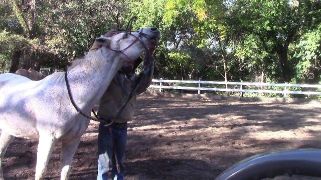 Hard To Bridle Horses