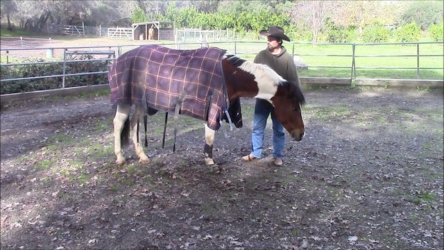 Is Your Horse Nervous Of Winter Blankets