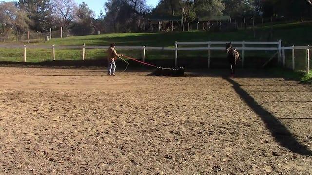 Desensitizing Your Horses Part 1