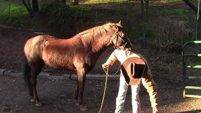 Blow Drying Your Horse