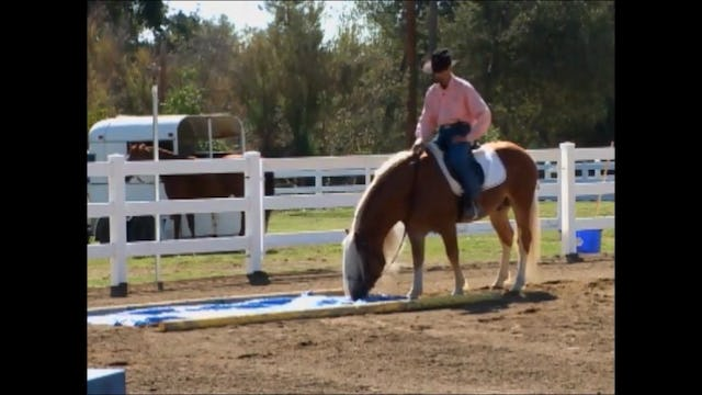 Obsticle Crossing (Saddle Exercises)