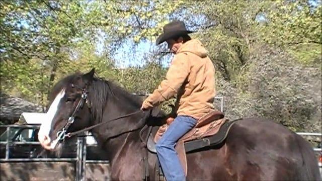 Shoulder Control under saddle (Part 2, Saddle Exercises)