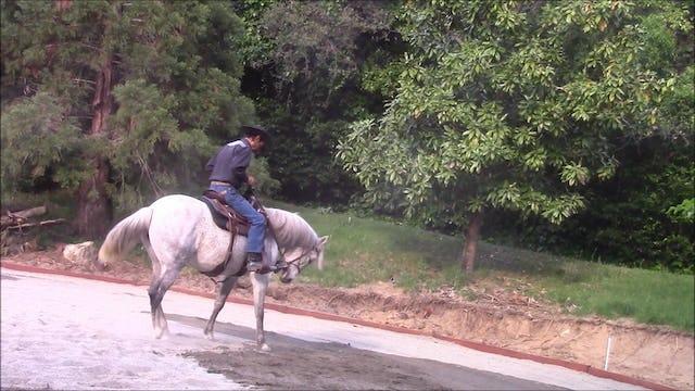 Stopping and Backing Under Saddle, Hip, Shoulder, Shoulder  (Part 2, Saddle Exercises)