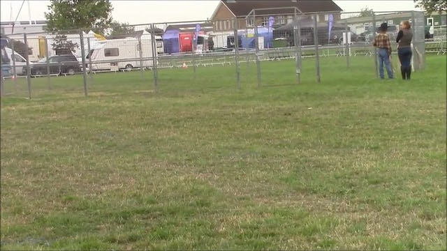 Aggressive Horse Behavior with Mike Hughes, Demo at Equifest, Essex England (Part 1, Special Event)