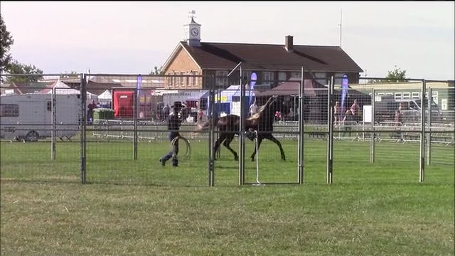 Basic Round Penning With Mike Hughes, Demo at Equifest,  Essex England (Special Event)