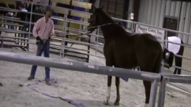 Maryland World Horse Expo 2012 with Mike Hughes (Part 1, Special Event)