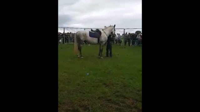 Mounting and Dismounting the Difficult horse with Mike Hughes, Demo, Norfolk United Kingdom (Special Event)