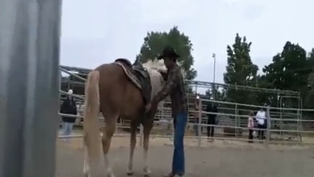 Stallions, How they should act at home and in Public with Mike Hughes, Demo, Shadow Glen Riding Stables (Special Event)