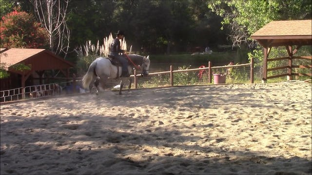 Directional Control (Saddle Exercises)