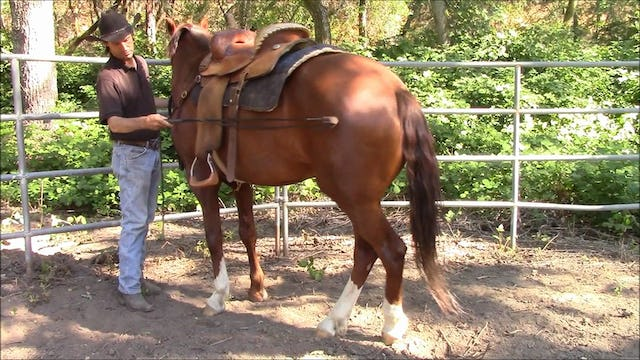 Recongnizing The Slightest Try From Your Horse
