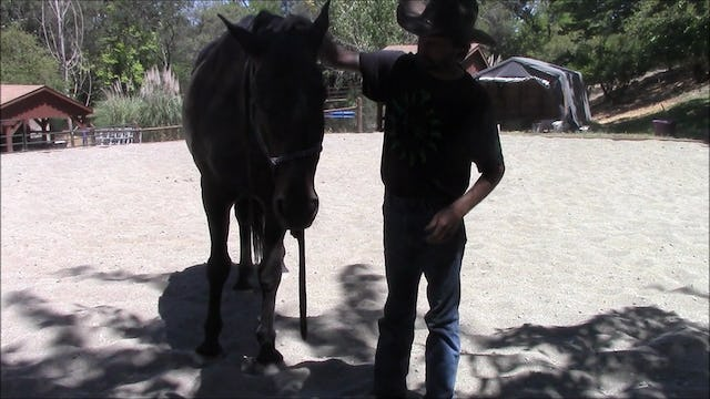 Teaching Horses To Put Their Halters On (Ground Exercise)