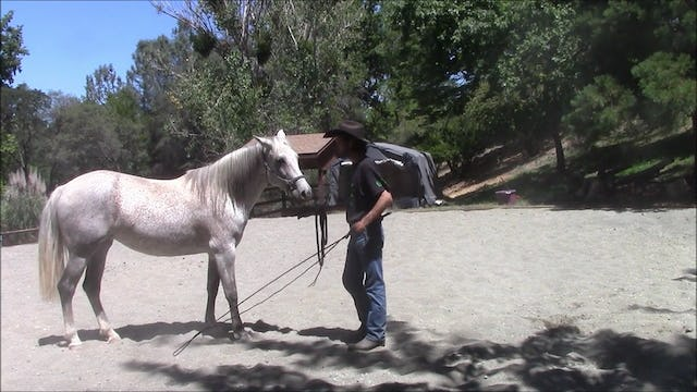 Rosanna (Working with a horse that will not move off)