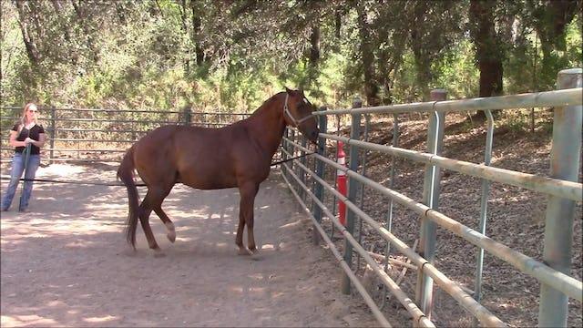 My Horse Pulls Back