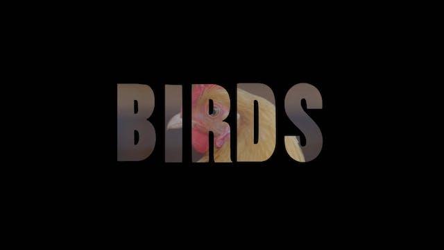 Season 5, Episode 14: Birds