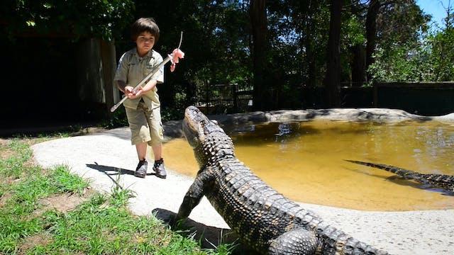 The 8-Year-Old Gator Wrangler - Littl...