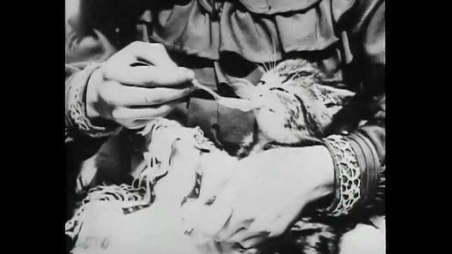 Gattino malato