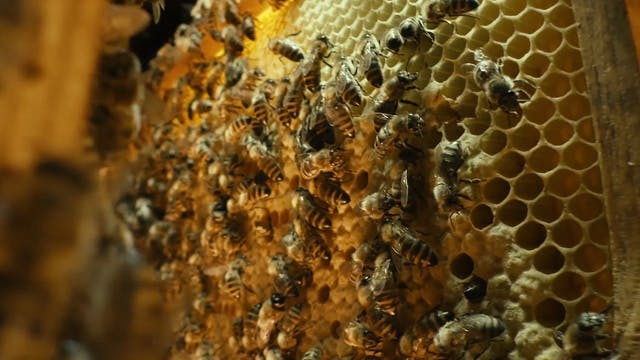 More Than Honey: Narrated by John Hurt