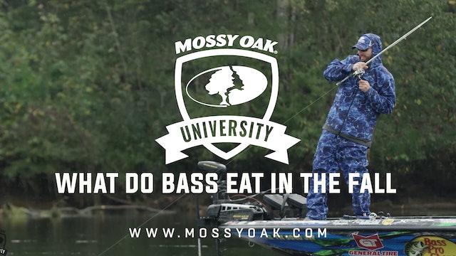 What Do Bass Eat in the Fall - Ott DeFoe Fishing Tips