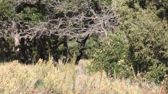 Deep in Mountain Country • Elk in Colorado