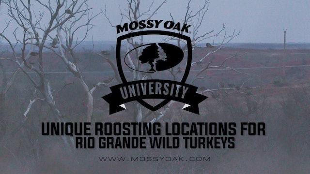 Unique Roosting Locations For Rio Grande Wild Turkeys