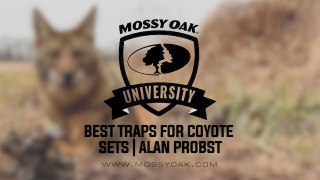 Best Traps for Coyote Sets with Alan Probst