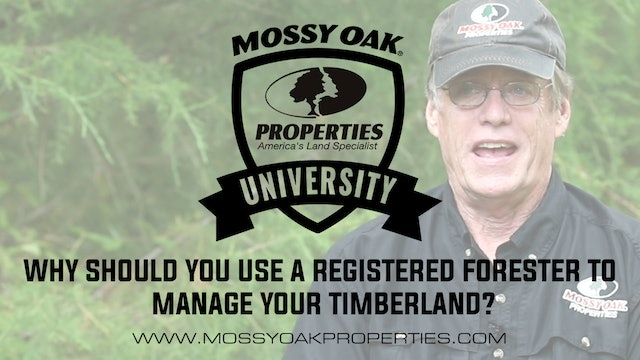 Why Should You Use A Registered Forester To Manage Your Timberland?